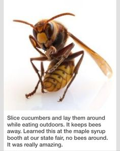 Use Cucumber Slices To Keep Bees Away During Outside Events