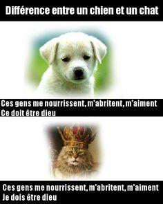 La différence entre chien et chat révélée