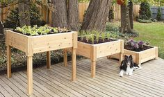 waist high gardening containers | Cedar Square Raised Containers