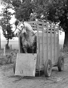 There's more than one way to fit a Giant Horse into a trailer.....