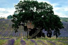A centuries-old majestic oak is home to Suite Bleue, one of two tree houses at La Piantata, Italy | Architectural Digest