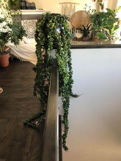 Inside Plants, Room With Plants, Indoor Garden, Garden Plants, Hoya Plante, Household Plants, Gnome Garden, Outdoor Plants, Hanging Plants