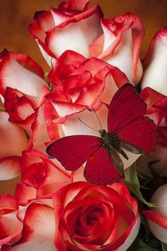 Red-tipped roses and fire engine red butterflies! hot!