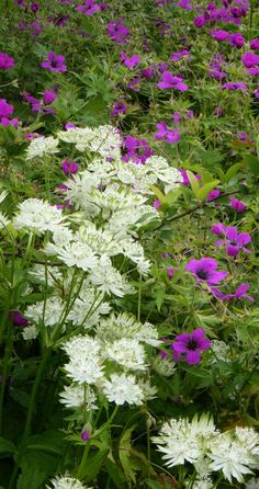 My Favorite Plant Combinations 63