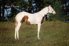 Horses, Painting, Animals, Animales, Animaux, Painting Art, Paintings, Animal, Animais