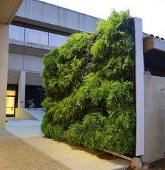 Fern Wall Vertical Garden for Tesla Motors, Palo Alto, California by Chris Bribach of Plants On Walls using the Florafelt Pro System.