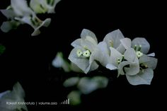 Botanical Garden. #flowers #flower #petal #petals #nature #beautiful #love #pretty #plants #blossom #sopretty #spring #summer #flowerstagram #flowersofinstagram #flowerstyles_gf #flowerslovers #flowerporn #botanical #floral #florals #insta_pick_blossom #flowermagic #instablooms #bloom #blooms #botanical #floweroftheday #pictureoftheday @copyrightindia By Rakesh Krishnotula Follow on IG : rakesh.krishnotula Production : volume.asia