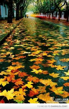 Fall Beauty - Autumn Leaves #nature