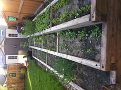 Gardens The ojays and Vegetables on Pinterest