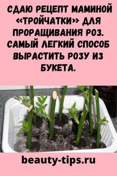 Asparagus, Vegetables, Herbs, Celery, Garden, Beauty, Food, Studs, Garten