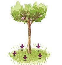Ge träd näring - Grannliv