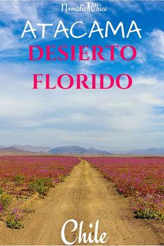 Flowering Desert in AtacamaAtacama Desert goes from the Atacama region to northern Chile and it's the driest desert in the world. Travel Around The World, Around The Worlds, Places To Go, Road Trip, Country Roads, Flowers, School, House, Painting