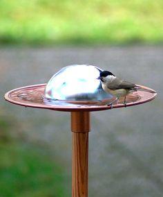 автоматический-птица-ванна