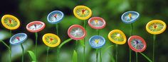 Condom flowers