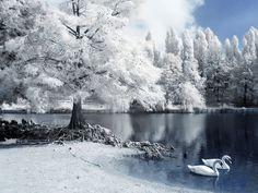 Il lago dei Cigni by  GrenOuille  , via 500px