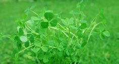 Naturally Green: 15 Healthy Recipes For Your St. Patrick's Day