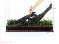 下草からの植栽