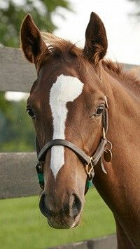 Zenyatta's gorgeous 2013 colt, by Tapit,  has received his official name, Ziconic!