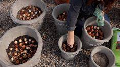 Container Gardening, Gardening Tips, Kitchen Gardening, Gardening Vegetables, Contemporary Flower Arrangements, Tulip Bulbs, Soil Layers, Cold Frame, Planting Bulbs