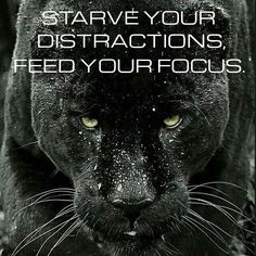 Starve your distractions, feed your focus