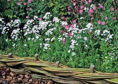 Die 68 Besten Bilder Von Beeteinfassung Cherries Garden Hedges