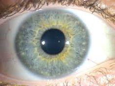 Resultado de imagen para iris y sistema nervioso central Iris, Mirror, Central Nervous System, Natural Medicine, Mirrors, Bearded Iris, Irises