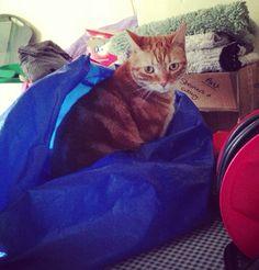 Chez sat in a bag? Normal..