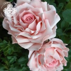 These handmade pink sugar roses were made for 1 of my latest cake designs. Sugar Rose, Pink Sugar, Sugar Flowers, Latest Cake Design, How To Make Cake, Cake Designs, Roses, Plants, Handmade