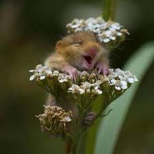 Resultado de imagen para animales cute