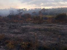 Bombeiros controlam incêndio em vegetação em Montes Claros