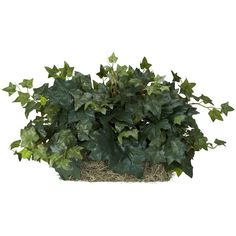 nearly natural Silk Ivy Ledge Plant, Green ($60) ❤ liked on Polyvore featuring home, home decor, floral decor, fillers, plants, green, nearly natural and green home decor