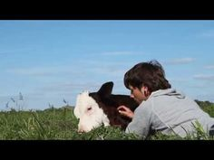 Touching Video of Rescued Cow Basking in the Sun With Human Friend. 37 Seconds in – Prepare to Smile Uncontrollably (VIDEO) | One Green Planet