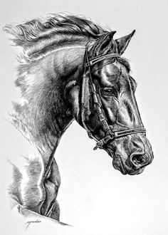 Pin by terrilyn cranford on art sketches pencil in 2019 horse drawings, hor Horse Drawings, Realistic Drawings, Animal Drawings, Art Drawings, Animal Sketches, Art Sketches, Stippling Art, Horse Sketch, Horse Artwork