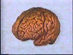 bouw en functies van de hersenen