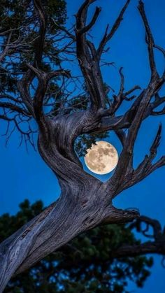'The soft green earth grows a crooked tree with a bright blue moon for all to see. Moon Pictures, Nature Pictures, Pretty Pictures, Full Moon Photos, Moon Pics, Beautiful Moon, Beautiful World, Shoot The Moon, Moon Photography