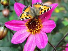Many flowers in the garden to attract butterflies.