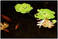 Koi Pond Digital Watercolor by Creatography on Etsy, $42.99