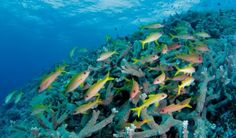 Coral fish biodiversity loss: Humankind could be responsible