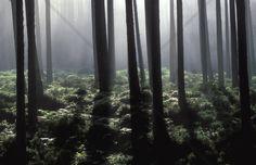 Backlit Forest - Fototapeter & Tapeter - Photowall
