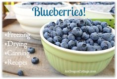 All About Blueberries- how to freeze, dry, and even can, plus a list of great recipes to use your blueberry harvest! #blueberry #blueberries #desserts #breakfast #healthy #preschoolkitchen #snack
