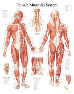ANATOMY STRUCTURES