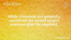 White rhinoceros are generally considered the second largest mammal after the animal.