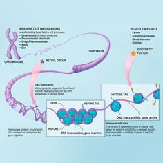 Epigenetics - You are not a victim of your DNA! Intentions can change your genes.