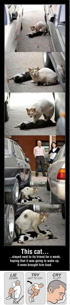 This cat - Win Picture. wow, such loyalty in animals. Uncanny...