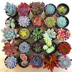 Have you ever wondered to yourself what would happen if you coloured succulents your succulents? Well, you can make your succulents change colors on their. How To Water Succulents, Types Of Succulents, Environmental Change, More And Less, Do Exercise, House Smells, Things To Know, How To Look Pretty, Color Change