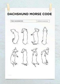 Dachshund Morse Code