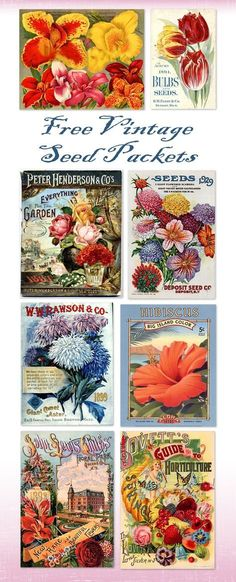 16 trendy Ideas for vintage flower art illustrations seed packets Floral Printables, Printable Crafts, Free Printables, Printable Vintage, Printable Flower, Free Printable Clip Art, Vintage Seed Packets, Seed Packaging, Free Graphics