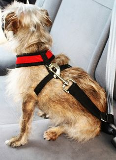Click to read more about how you can keep your furry family member safe with Doggie Seatbelts!