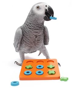 Face it: We're here to entertain our birds, not the other way around.  Games to play with your bird.