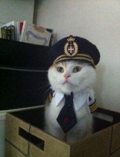 Welcome onboard. I'll be your Catpain